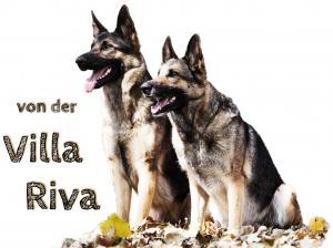 Zuchtstätte von der Villa Riva Bild